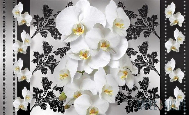 Fototapeta Białe storczyki na kwiecistym wzorze 1286