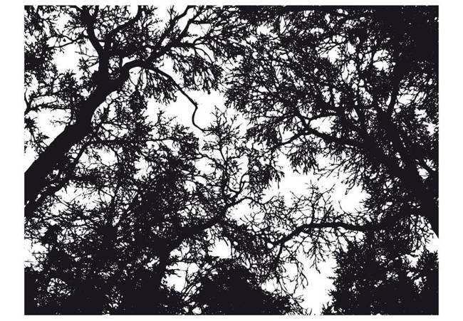 Fototapeta - Bleak forest