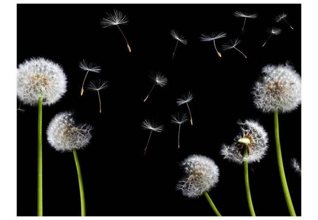 Fototapeta - Dmuchawce, latawce, wiatr...