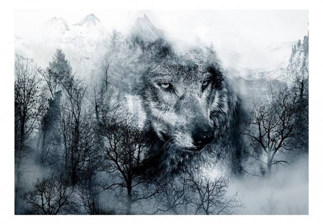 Fototapeta - Drapieżnik z gór (czarno-biały)