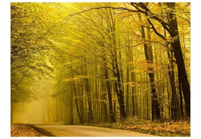 Fototapeta - Droga przez jesienny las