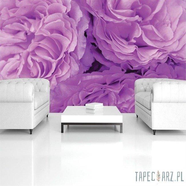 Fototapeta Fioletowe kwiaty 657
