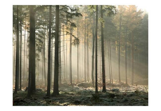 Fototapeta - Foggy November morning