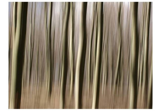 Fototapeta - Forest