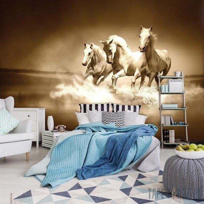 Fototapeta Galopujące konie - sepia 427