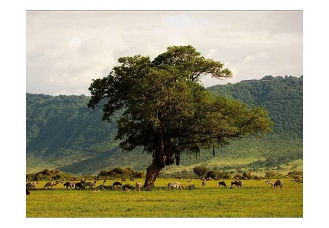Fototapeta - In a crater of Ngoro ngoro
