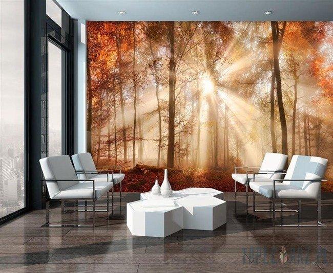Fototapeta Jesienny słoneczny las 10471
