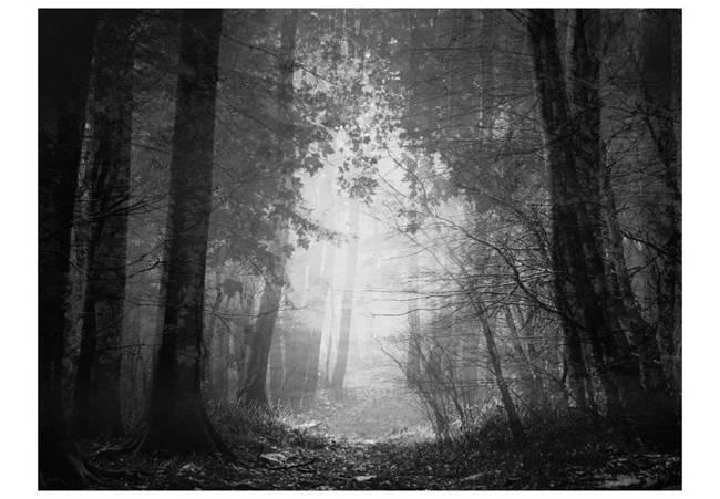 Fototapeta - Las cieni