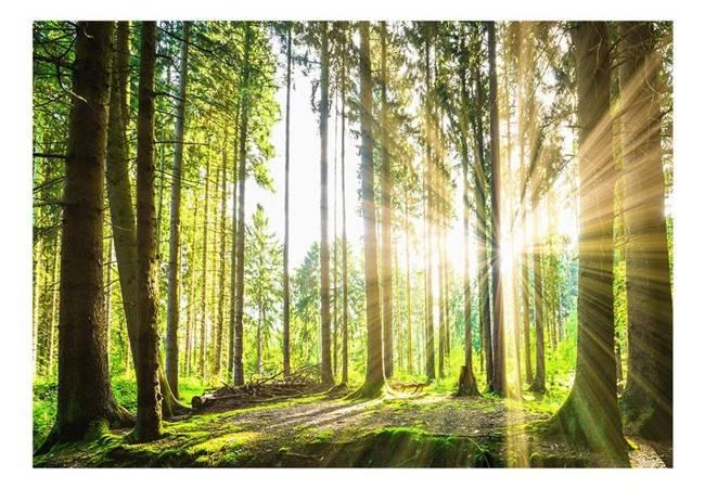 Fototapeta - Leśne opowieści