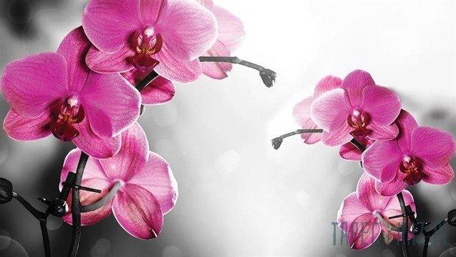 Fototapeta Orchidea na szarym tle 1034