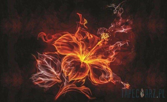 Fototapeta Płonący kwiat 1105