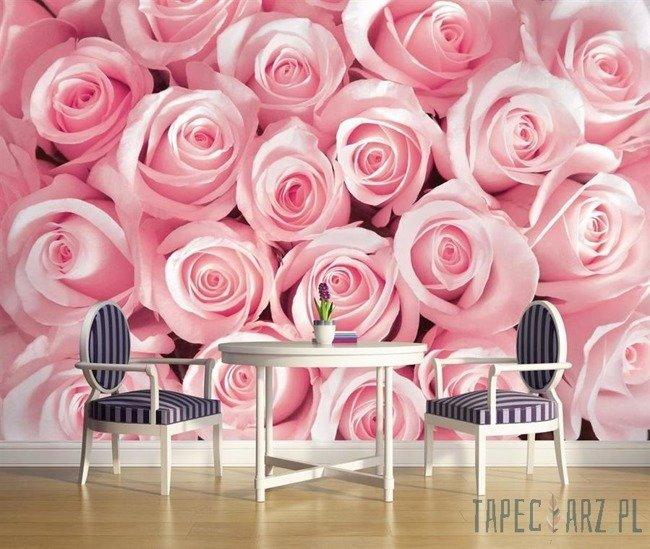 Fototapeta Różowa róża 2168