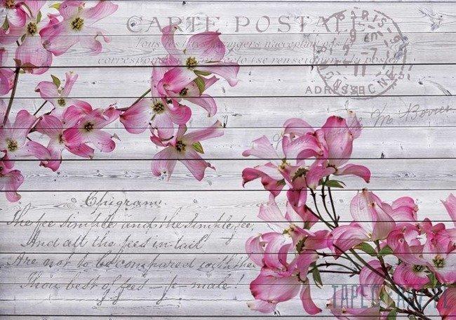 Fototapeta Vintage - różowe kwiaty 3546