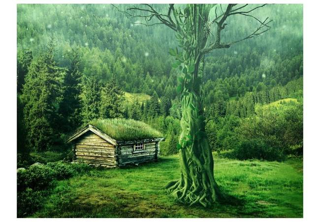 Fototapeta - Zielona samotnia