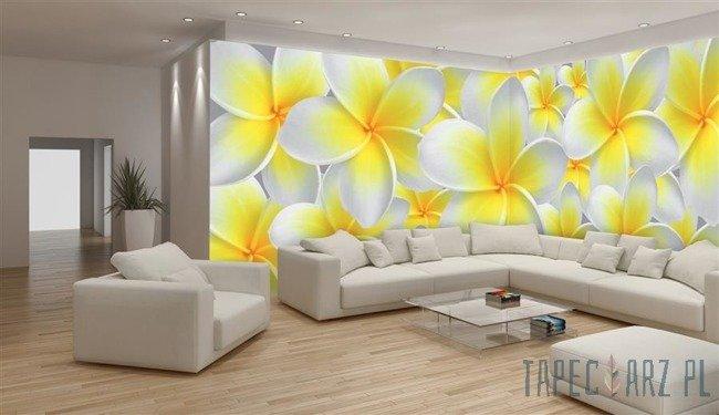 Fototapeta na flizelinie Biało-żółte kwiaty 793VEE
