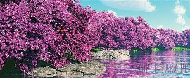 Fototapeta na flizelinie Fioletowe drzewa 3536VEP