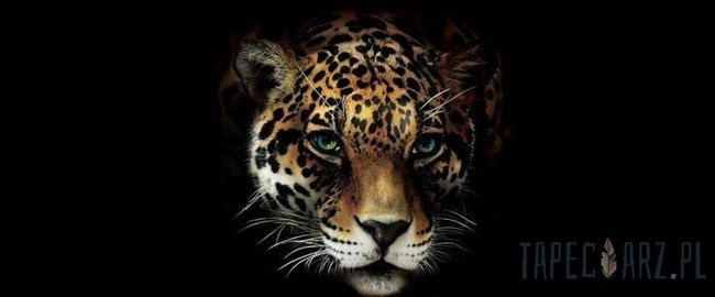 Fototapeta na flizelinie Gepard 10148VEP