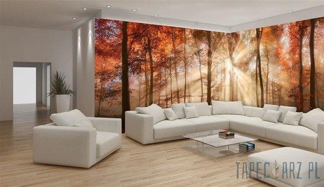 Fototapeta na flizelinie Jesienny słoneczny las 10471VEE