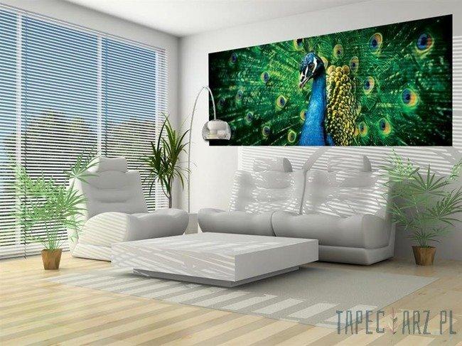 Fototapeta na flizelinie Paw z zielonymi piórami 630VEP