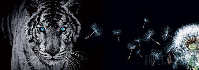 Fototapeta na flizelinie Tygrys i dmuchawiec 792VEE