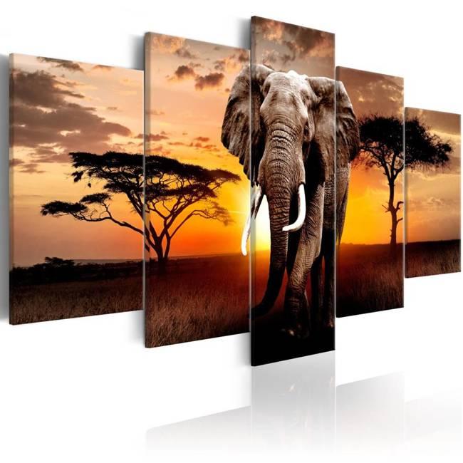 Obraz - Wędrówka słonia