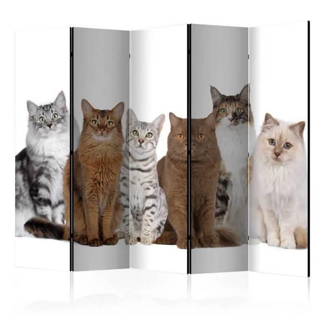 Parawan 5-częściowy - Słodkie kotki II [Room Dividers]