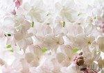 Fototapeta Białe kwiaty 3598