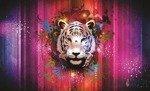 Fototapeta Biały tygrys 893