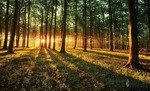 Fototapeta Las o zachodzie słońca 2226