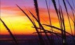 Fototapeta Zachód słońca na łące 650