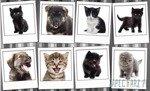 Fototapeta Zdjęcia piesków i kotków 10453